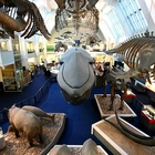 Natural History Museum photo (3)