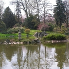 Japanese Garden in Wroclaw photo (3)