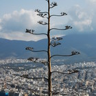Mount Lycabettus photo (4)