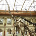 Natural History Museum in Berlin photo (4)