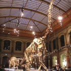 Natural History Museum in Berlin photo (1)