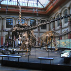 Natural History Museum in Berlin photo (3)